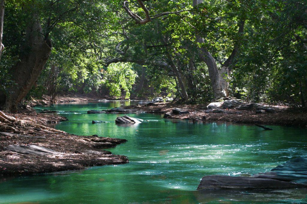 grün schimmernder Fluß in schattigem Wald